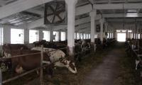 gyvulininkyste.jpg